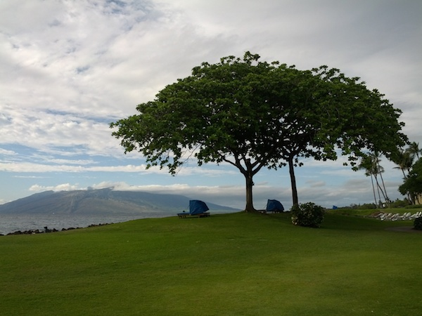 Wailea green spaces