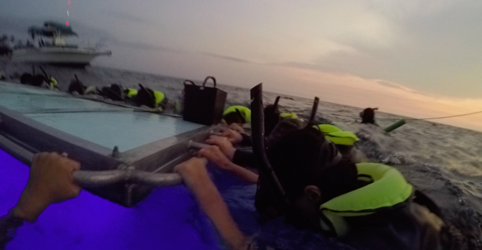 manta-ray-snorkle-kona-10